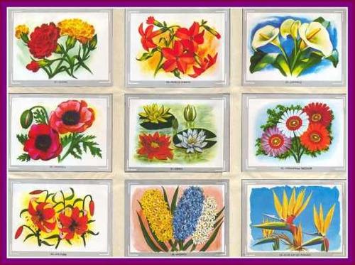 L mina 45x30 cm vyc104 reino vegetal flores y for Plantas ornamentales del ecuador