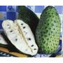 Muda Da Fruta Graviola Medicinal/comercial/ogânica