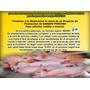 Proycto Manual Porcino; Cerdos, Cochino Sirve Para Credito