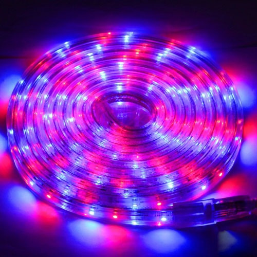 Tira led carcasa impermeable luz rgb rope light 60 3 metro tira led carcasa impermeable luz rgb rope light 60 3 metro 144800 en mercado libre aloadofball Images