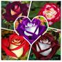 100 Sementes De Rosas Raras E Exóticas Super Barata..