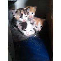 Doação Gatos Filhote