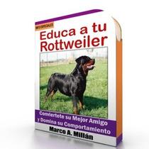 Como Educar A Un Rottweiler - Guía De Adiestramiento Raza