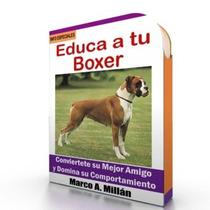 Como Educar A Un Perro Boxer - Videos Paso A Paso