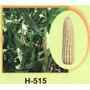 Maiz Hibrido 515 1kg Semilla Para Grano De Temporal