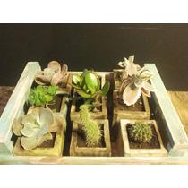 Macetas De Madera Con Suculentas Y Cactus
