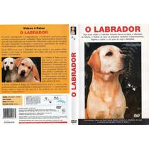 Dvd Cães - O Labrador