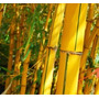 Caña Bambú Vittata Pilar, Escobar, Tigre, Delta, Zona Norte