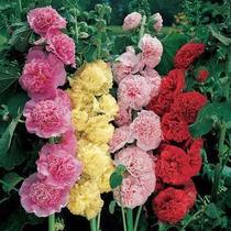 Sementes Malva Duplas Alcea Rosea Flor P/ Mudas Planta Rara