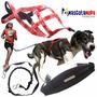 Kit Completo Para Canicross Correr O Trotar Con Su Perro