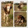 Perro Cachorron Timido Y Dulce En Adopción Responsable