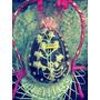 Huevo De Pascua Artesanales! Grandes!! 2016 Efect.