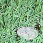 Grama Semillas 100grs Queen Grass Deluxe