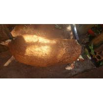 Rama Pra Mudas De Mandioca Amarela Mole Mole Sem Fibra