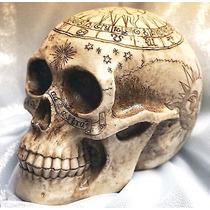 Cráneo Zodiaco Sol Luna Colección Astrología Decoración