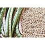 Feijão-caupi/macassar - Nutritivo/dietético - 200 Sementes