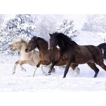 14140 Ravensburger Rompecabezas Caballos En La Nieve 500 P