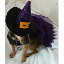 Disfraz Mascota Vestido Sombrero Brujita Halloween Gato Ropa