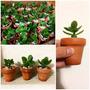 Recuerdos Plantas Suculentas Y Cactus Mini