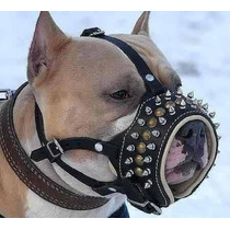 Focinheira De Couro Spikes Regulagem Pitbull American #06xe