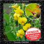 Crotalaria Flor Contra A Dengue E Vermes Sementes Para Mudas
