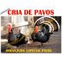 Aprende Avicultura Especial Cria De Pavo, Envio Gratis