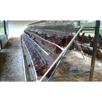 Jaula Para Gallinas Ponedoras 96 Aves