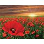Flores Amapolas En Tela Canvas 120x90 Cm Bastidor , Exelente