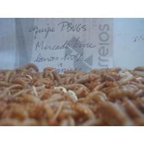 Larvas - Tenebrio Molitor - 300 Unidades - Qualidade Premium
