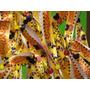 Pulsera Brazalete Personalizado 100% Full Color Sublimado X6