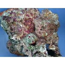 Roca Curada Con Alga Coralina Kg Acuario Marino
