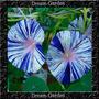 Trepadeira Ipomoea Flying Saucers Sementes Flor Pra Mudas