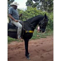 Vendo Cavalo Super Manso Mais Detalhes Chama Whats 9515-6365
