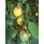 Mburucuyá, Maracuyá- Enredadera Floral, Fruto Comestible