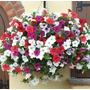 (30) Sementes Petúnia (petunia Juss) + Folheto Como Plantar!