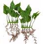 Plantas Artificiales 15cm Para Peceras, Acuarios