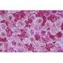 Floral Rosa e Pink