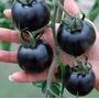 Semillas Tomate Negros Cherry Pack