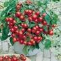 Sementes De Tomate Samambaia Cereja Frete Grátis Vermelho