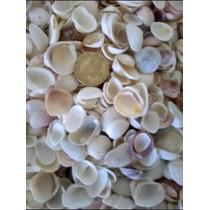 Conchas Marinas,,manualidades,bodas,mix Conchas Mar