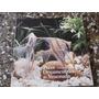 Peces Ornamentales De Venezuela Cuadernos Lagoven Ilustrado
