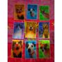 Tarjetas Lenticulares De Perros Y Gatos