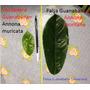 Plantines(4) De Guanabana Verdadera Graviola Frutales