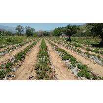Stevia Hoja Seca Organica 1 Kilogramo Promoción Especial