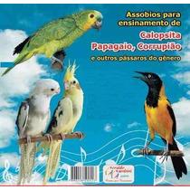 Assobios De Ensinamentos Papagaios, Calopsitas E Corrupiões