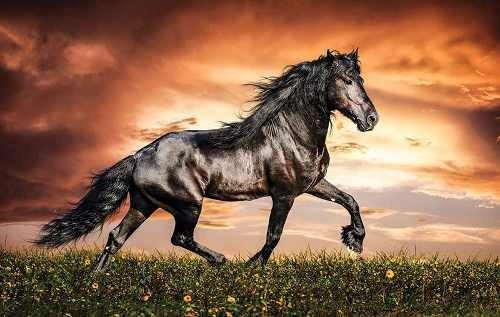 Ver fotos de cavalos selvagem 69