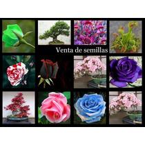 Semillas Acer Palmatum,sakura Bonsai,rosales,venus4/unidades