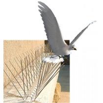 Puas Anti Palomas O Aves Protege Iglesias Y Monumentos