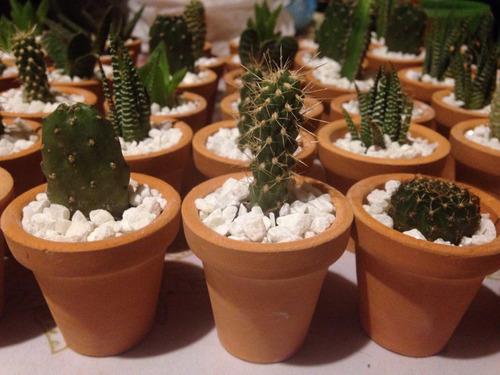 cactus miniatura en minimaceta barro caja 100pzas - $ 3,075.00 en