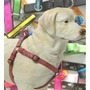 Pecheras Con Collar Mascotas Resistente Razas Grandes
